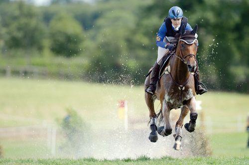 Photo cheval 1 source Jeux Équestres Mondiaux Alltech FEI 2014