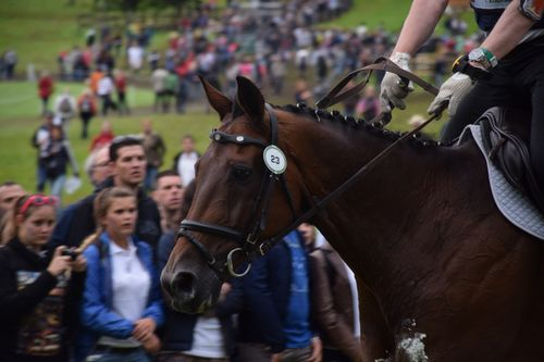 JEM 2014 Cross au Haras 037